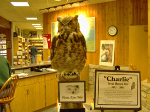 Charlie the Owl